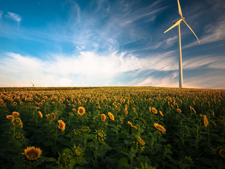 A Covid-19 muda a forma como celebramos o Dia Mundial do Meio Ambiente